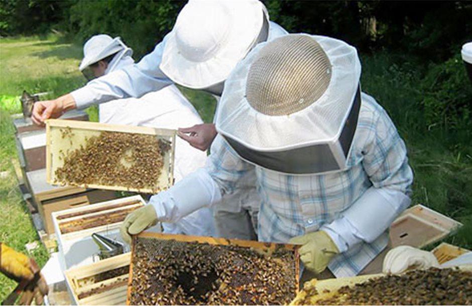 Στα Ιωάννινα σεμινάριο μελισσοκομίας