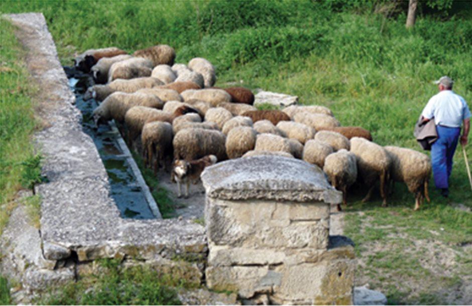 Ενημέρωση για το νέο Μητρώο Αιγοπροβάτων στην Καστοριά