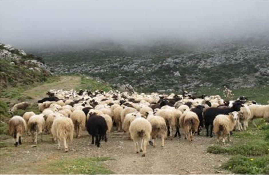 Διάλογο θέλουν και οι κτηνοτρόφοι Μαγνησίας