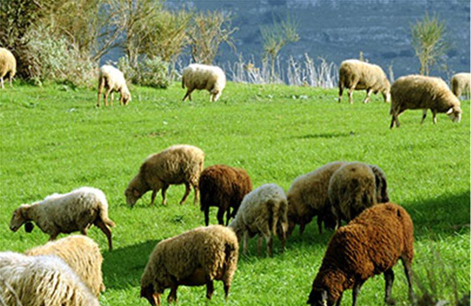 Στερούν κονδύλια οι βοσκότοποι από το τσεκ των κτηνοτρόφων